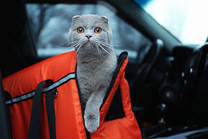 Cat and pet carrier