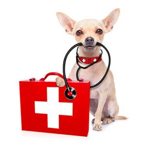 Pet w emergency kit
